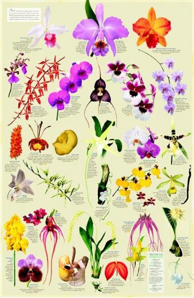 http://www.miguel-miranda.com/files/gimgs/th-7_OrchidsEpi.jpg